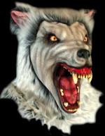 2622520-20snow20wolf20copy20copia